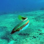 Κατάδυση Γύλος Ψάρι