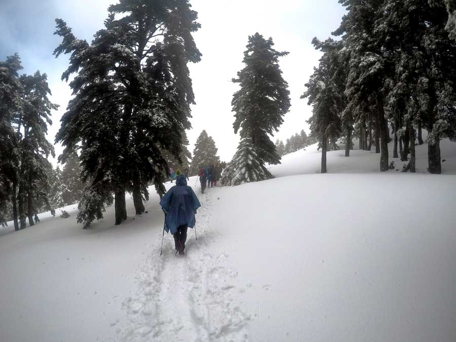 Μονοπάτι στη Δίρφη χιόνι δέντρο Δάσος από έλατα