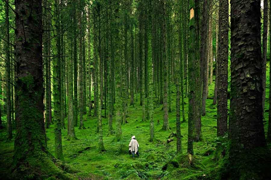 Υπάρχει δάσος