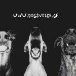 Βοηθάμε τα ζώα - Τρέχουμε για το Dogs' Voice