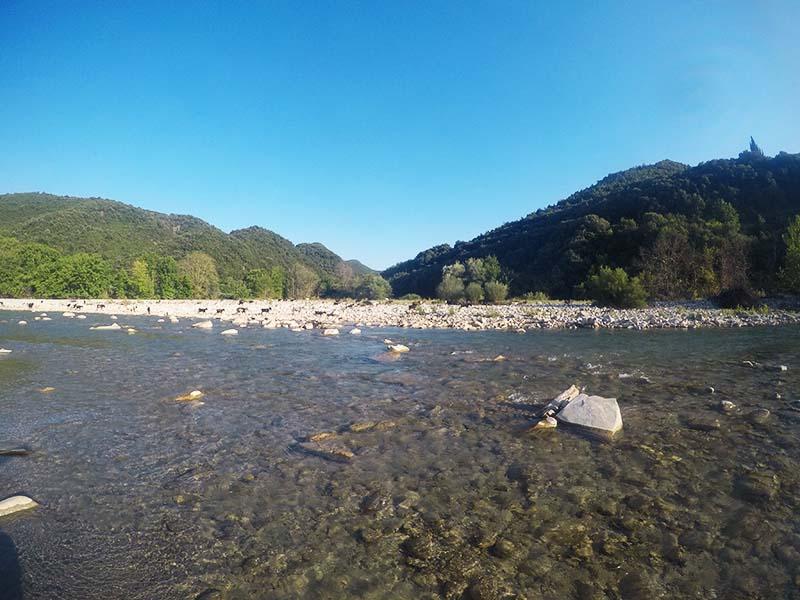 Πρόβατα στον Εύηνο ποταμό