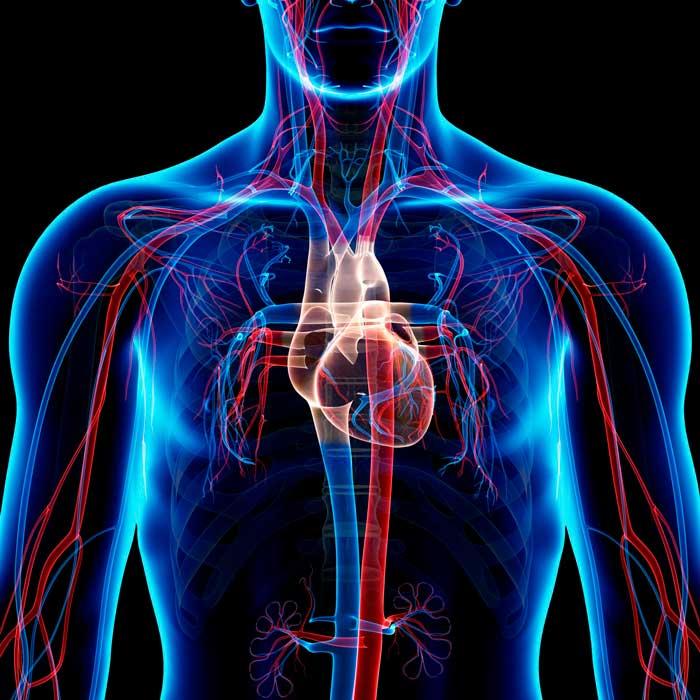 Αερόβια Άσκηση Καρδιακοί Παλμοί
